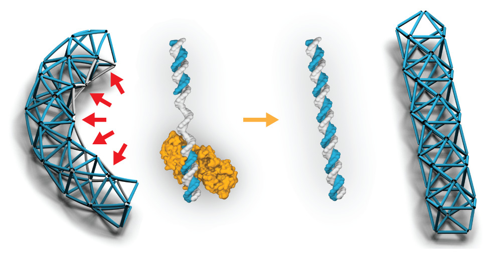 DNA Polymerase assisted gap filling of triagilated DNA origami Thorsten Lars Schmidt, Nayan Agarwal, Michael Matthies